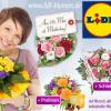 15€-Gutschein für Lidl-Blumen - bei DailyDeal ab 4,50€