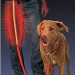 Wilgor leuchtende Hundeleine für 19,99€ frei Haus bei Quelle
